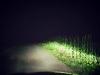 Driving through the corn...